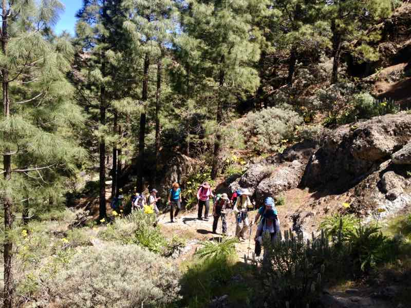 Hikes to the center of Gran Canaria